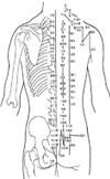 人体穴位图解